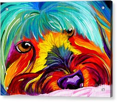 Maltese - Dreaming Of Biscuits Acrylic Print by Alicia VanNoy Call