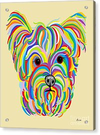 Yorkshire Terrier ... Yorkie Acrylic Print