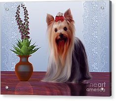 Yorkshire Terrier Acrylic Print by Corey Ford