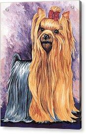 Yorkshire Terrier Acrylic Print by Kathleen Sepulveda