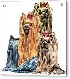 Yorkshire Terriers Acrylic Print by Kathleen Sepulveda