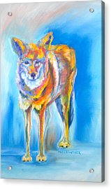 Acrylic Print featuring the pastel Yosemite Coyote by Pat Crowther