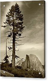Acrylic Print featuring the photograph Yosemite National Park  by John Hix