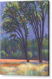 Yosemite Trees Acrylic Print