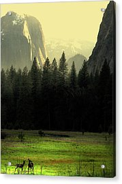 Yosemite Valley Golden . Vertical Acrylic Print by Wingsdomain Art and Photography
