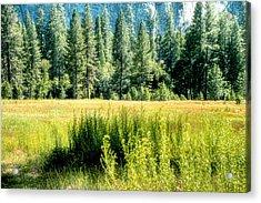 Yosemite Valley2 Acrylic Print by Michael Cleere