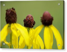 Acrylic Print featuring the photograph You And Me by Joel Witmeyer
