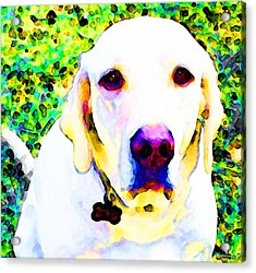 You Are My World - Yellow Lab Art Acrylic Print by Sharon Cummings