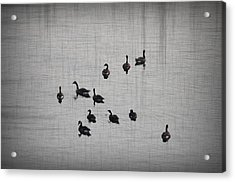 You Better Get Your Ducks In A Row Acrylic Print by Bill Cannon