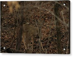I See You  Acrylic Print by Charles Cook