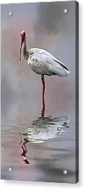 You Lookin' At Me? Acrylic Print by Cyndy Doty