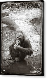 You Looking At Me Acrylic Print by Sandy Adams