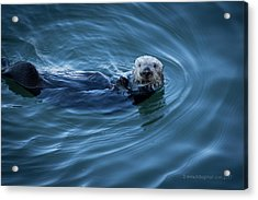 Acrylic Print featuring the photograph You Otter Take My Picture, Lady by Lora Lee Chapman