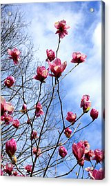 Young Blooms Acrylic Print