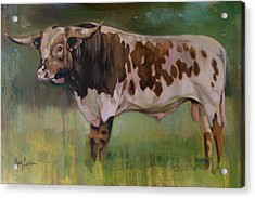 Young Bull Acrylic Print by Mary Leslie