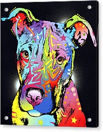 Young Bull Pitbull Acrylic Print by Dean Russo