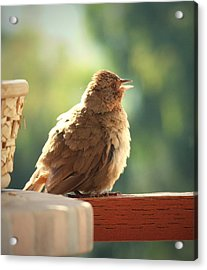 Young California Towee Acrylic Print