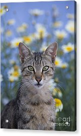 Young Cat In Greece Acrylic Print by Jean-Louis Klein & Marie-Luce Hubert