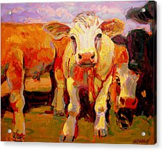 Young Cow Acrylic Print by Brian Simons