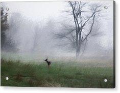 Young Deer And Tree Acrylic Print