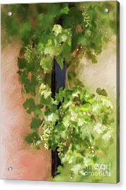 Acrylic Print featuring the digital art Young Greek Wine by Lois Bryan