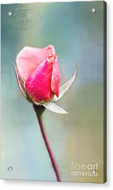 Young Love Acrylic Print