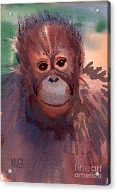 Young Orangutan Acrylic Print