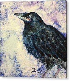 Young Raven Acrylic Print