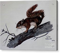 Young Squirrel Acrylic Print by Judy Kirouac