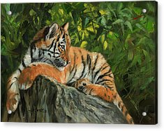 Acrylic Print featuring the painting Young Tiger Resting On Rock by David Stribbling