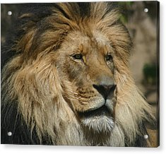 Your Majesty Acrylic Print by Anthony Jones