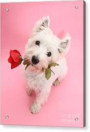 Your Valentine Every Day Acrylic Print