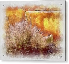 Yucca And Adobe In Aquarelle Acrylic Print