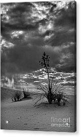 Yucca At Sunset Acrylic Print
