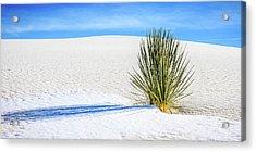 Yucca Acrylic Print by Marla Hunt
