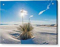 Yucca Sunburst - White Sands National Monument Photograph Acrylic Print by Duane Miller