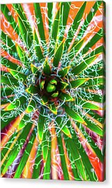 Yucca Sunrise Acrylic Print by Darren White