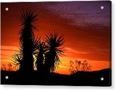 Yucca Sunrise Acrylic Print by Eric Foltz
