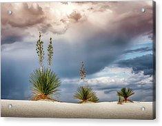 Yucca Three Acrylic Print by James Barber