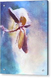 Winter Abstract - Snow And Ice On Rhododendron Leaves Acrylic Print