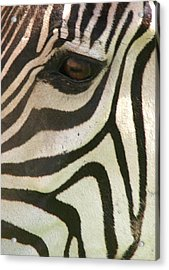 Z-eye Acrylic Print by Donald Tusa