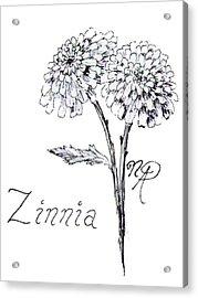 Zannie Zinnia Acrylic Print