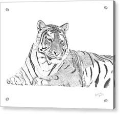 Zarina A Siberian Tiger Acrylic Print by Patricia Hiltz