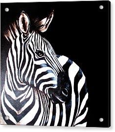 Zebra 2 Acrylic Print