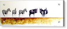 Zebra And Wildebeest Acrylic Print