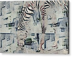 Zebra Art - 52spt Acrylic Print by Variance Collections