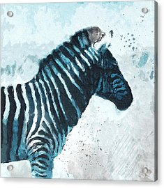 Zebra- Art By Linda Woods Acrylic Print by Linda Woods