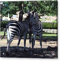 Zebra Buds Acrylic Print