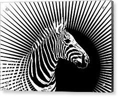 Zebra Dawn Acrylic Print by Michael Durst