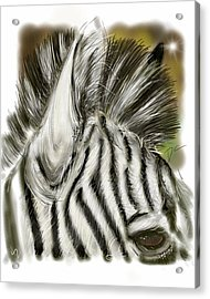 Acrylic Print featuring the digital art Zebra Digital by Darren Cannell